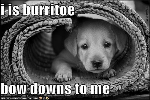 i is burritoe  bow downs to me