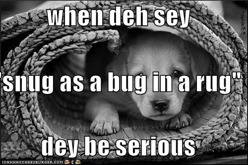 "when deh sey ""snug as a bug in a rug"" dey be serious"