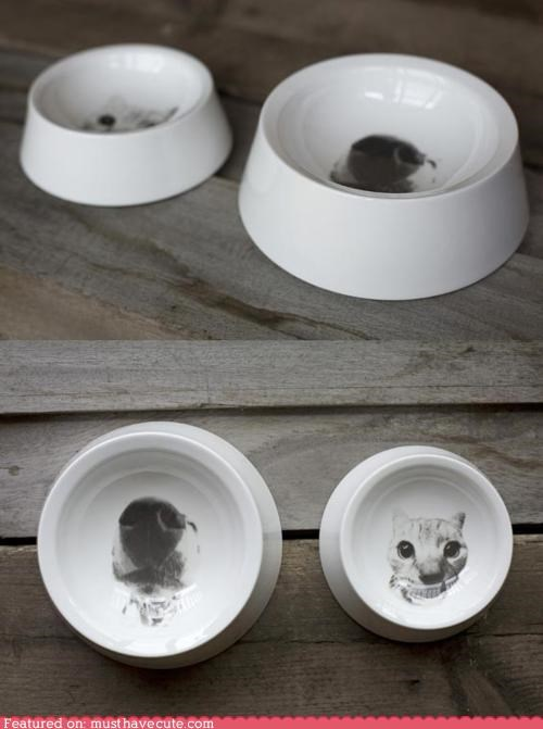 bowls,cat,dish,dogs,food,kibble,pets,water