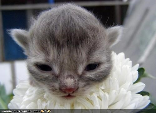 bloom,cyoot kitteh of teh day,flowers,fur,hair,nature,newborns,tiny