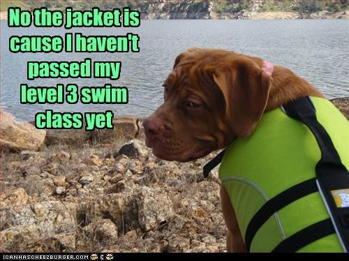 life jacket,lifejacket,mixed breed,pit bull,pitbull,swim,swimming