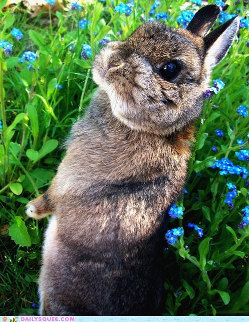 Bunny in a Sea of Green and Blue