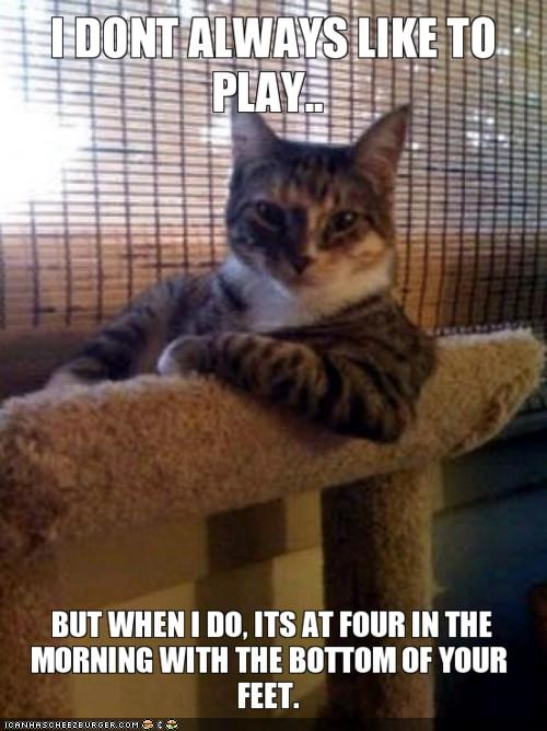 MemeCats: What Can I Say?  Ur Feets Amuse Me Greatly!