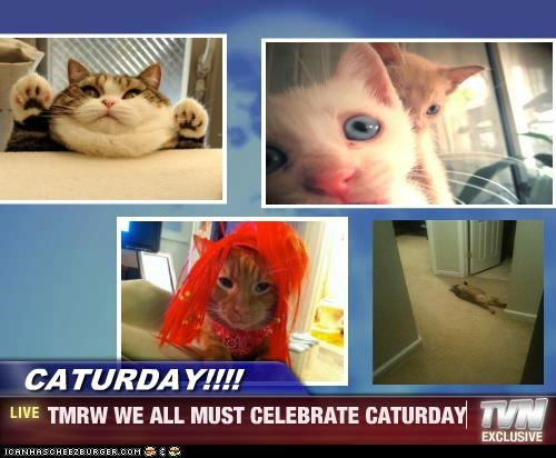 CATURDAY!!!! - TMRW WE ALL MUST CELEBRATE CATURDAY
