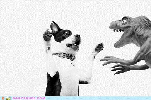 acting like animals,boston terrier,dinosaur,dogs,fighting,godzilla,monster,toy