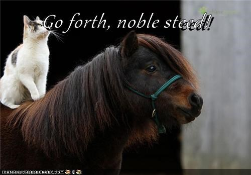cat,go forth noble steed,horse,I Can Has Cheezburger,noble steed,onward