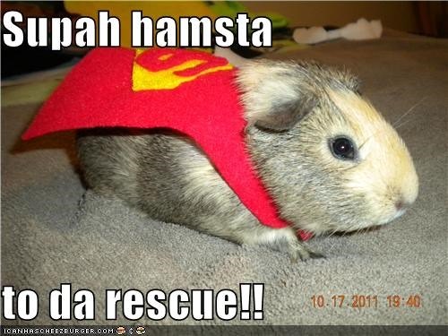Supah hamsta  to da rescue!!