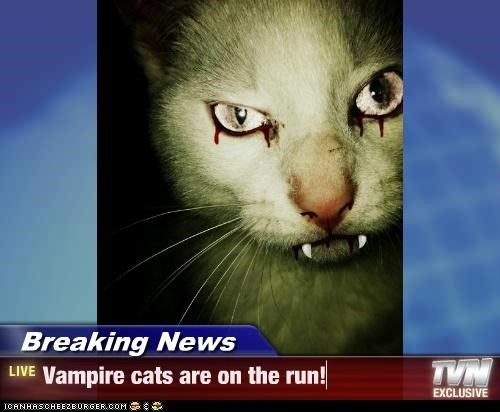 Breaking News - Vampire cats are on the run!