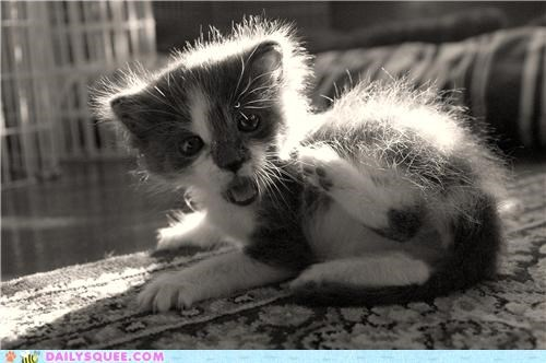baby,cat,discovery,expression,feet,kitten,reader squees,realization,shocked,surprised