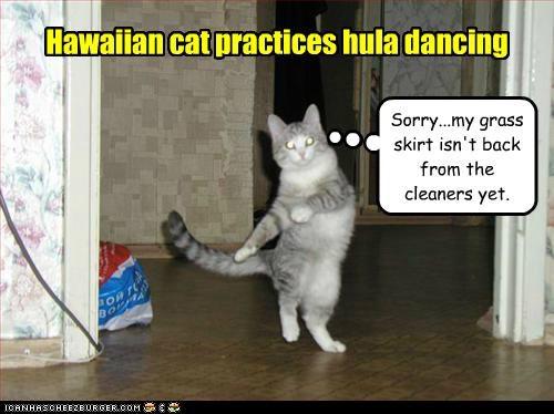 Hawaiian cat practices hula dancing