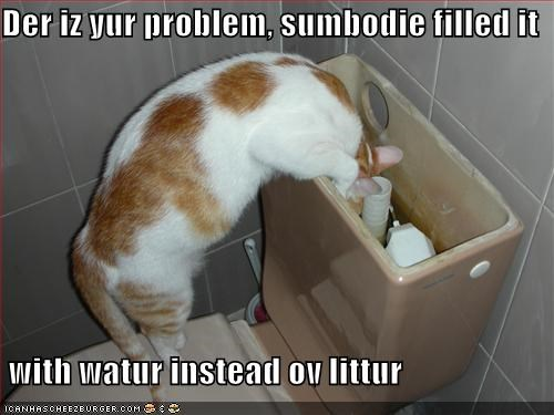 caption,captioned,cat,cat litter,filled,inspecting,inspection,litter,not,problem,tabby,toilet,water