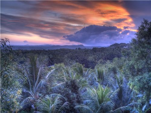 blue,clouds,Forest,getaways,Hall of Fame,horizon,orange,trees,Tropical,tropical forest,unknown location