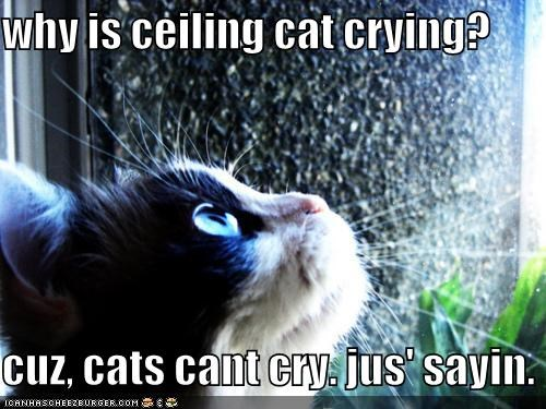why is ceiling cat crying?  cuz, cats cant cry. jus' sayin.