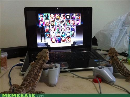 Bearded Dragon Mortal Kombat