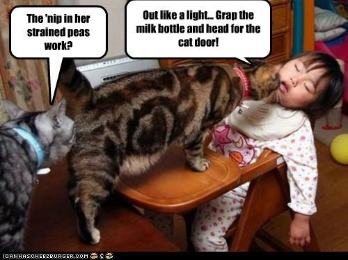 Cats are bigger enablers than we thought!