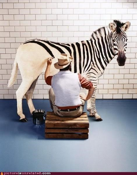 The Truth About Zebras