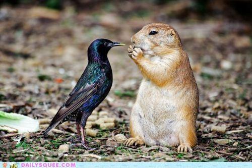 bird,contest,Interspecies Love,prairie dog,Staring,staring contest,starling