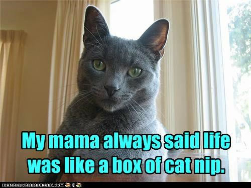 My mama always said life was like a box of cat nip.