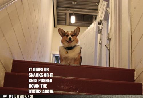 corgi,dogs,i has a hotdog,pushed down the stairs,silence of the lambs,snacks