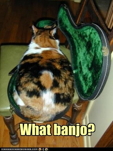 banjo,caption,captioned,case,cat,replacement,shape,sitting,tortie,what