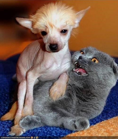 Goggies R Owr Friends: OMG GET IT OFF!  GETITOFFGETITOFFGETITOFF!