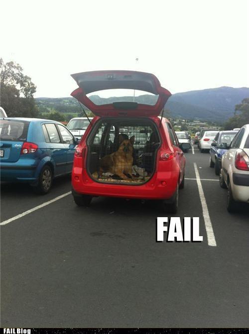 car alarm,cars,cheap,dogs,mans-best-friend,parking lot,security