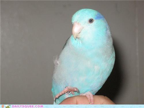 bird,parrot,reader squees,talon,trick,wave,waving