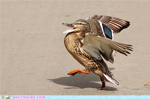 acting like animals,cocky,confident,duck,strut,strutting,swag,swagger