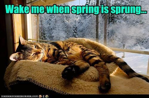 caption,captioned,cat,do not want,me,sleeping,snow,spring,sprung,wake,when,winter