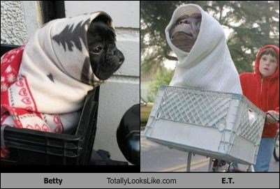 Betty the Pug Totally Looks Like E.T.