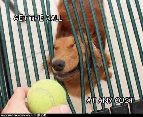 GET THE BALL