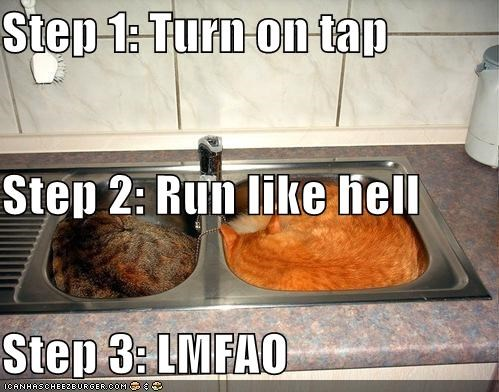 bad idea,caption,captioned,cat,Cats,do not want,evil,Hall of Fame,lmfao,one,run,sink,sinks,sleeping,step,steps,tap,three,turn on,two,water
