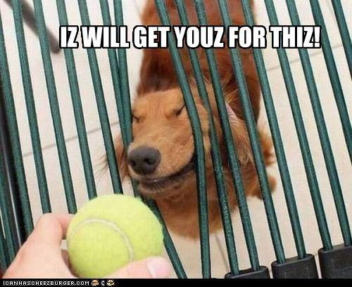 ball,derp,dogs,fetch,goggie,tennis ball