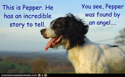 Pepper's Incredible Story