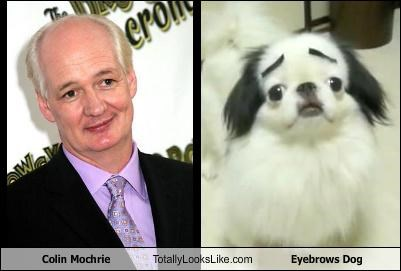 Colin Mochrie Totally Looks Like Eyebrows Dog