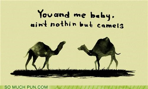 bad touch,bloodhound gang,camels,Hall of Fame,lyrics,mammals,parody,rhyme,rhyming,song