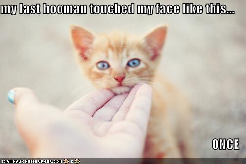 my last hooman touched my face like this...                                    ONCE