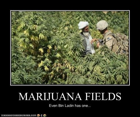 MARIJUANA FIELDS