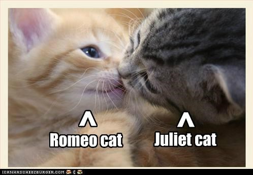 Romeo cat