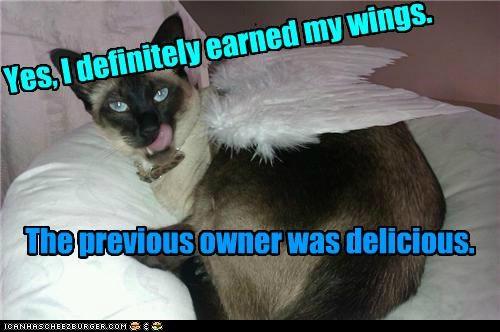 Yes, I definitely earned my wings.
