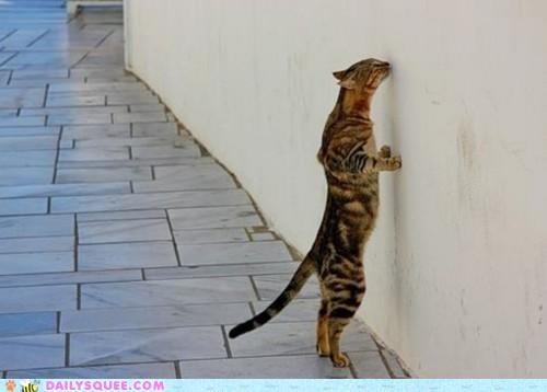 acting like animals,cat,catholic,faith,pilgrimage,prefix,pun,puns,religion,Wailing Wall