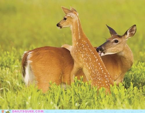 baby,deer,doe,does,family,fawn,fawning,mother,pun