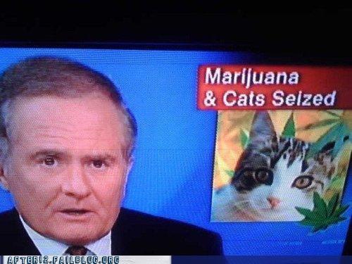 Cats,crunk critters,drug cartels,marijuana,news,pot