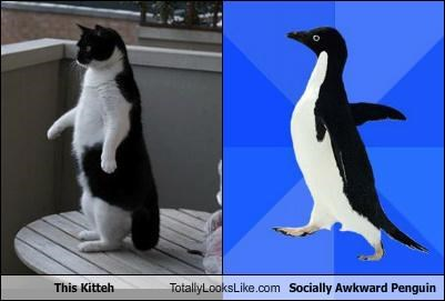 This Kitteh Totally Looks Like Socially Awkward Penguin