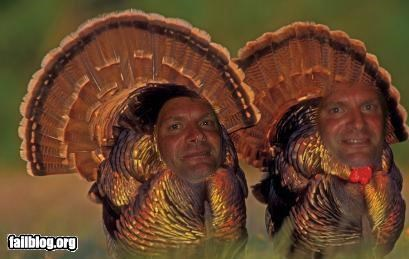 Twin Turkey _C_A_T_s