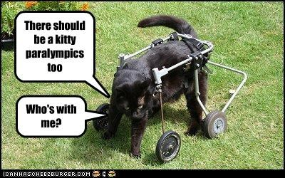 There should be a kitty paralympics too