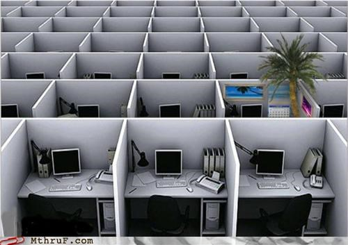 cubicles,palm trees,party cubicle