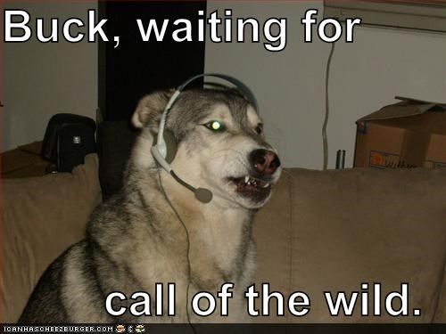 Buck, waiting for  call of the wild.