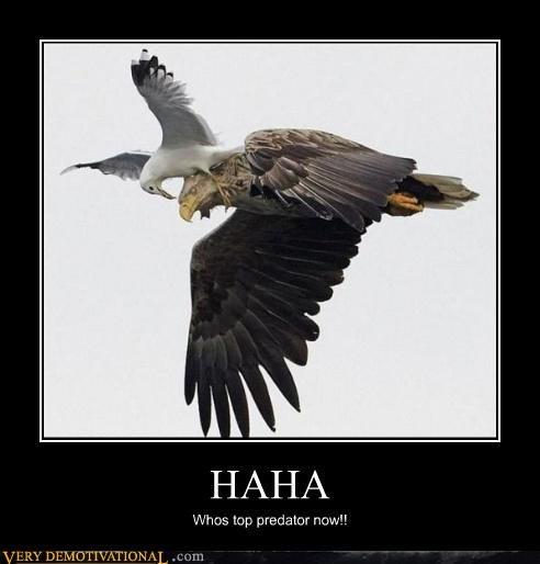birds,eagle,hilarious,seagull