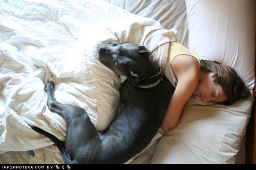 asleep,bed,cane corso,catching some zs,goggie ob teh week,human,monday,sleeping,tired